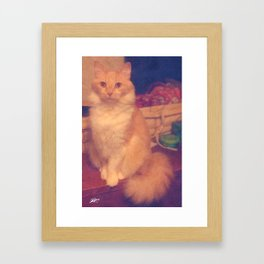 The most beautiful kitty Framed Art Print