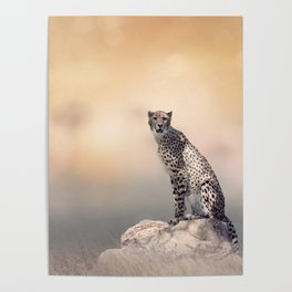 Young Cheetah sitting on a rock Poster