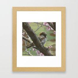 Sparrows of Spring 1 Framed Art Print