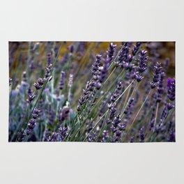 Lavender Meadow in France Rug