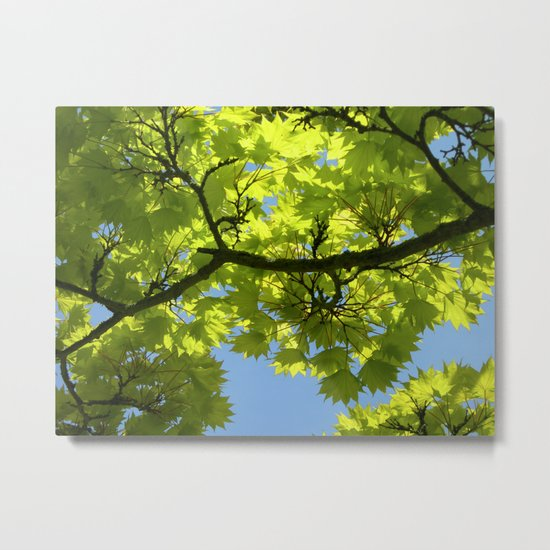 green maple tree XIII Metal Print