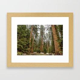 Sequoias in the Fog Framed Art Print