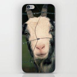 The Goat II iPhone Skin