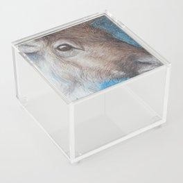 Reindeer (Rangifer tarandus) Acrylic Box
