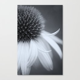 Black and White Coneflower Canvas Print