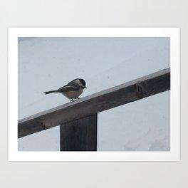Chickadee on a Weathered Wooden Railing Art Print
