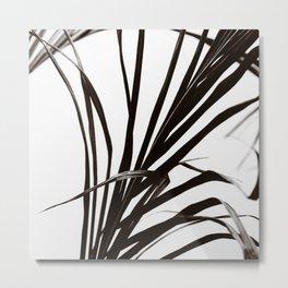 Palm BW Metal Print