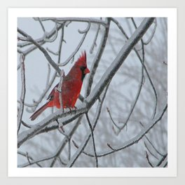 Redbird on Icy Tree Branch Art Print