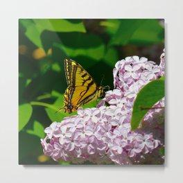 Pollination - Series; 1 of 3 Metal Print