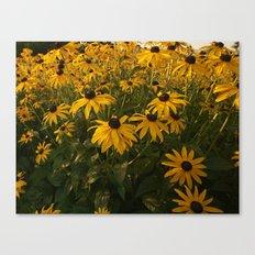 Drake Park Flowers...Dawn Canvas Print