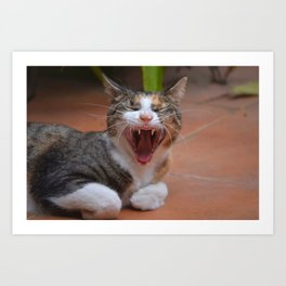 Liza the cat with a big smile Art Print