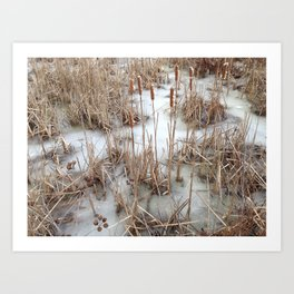 Huntley Meadows Park Art Print