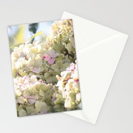The Beauty of Summer Stationery Cards