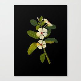 Mary Delany Vinca Rosea Vintage Botanical Art Black Background Realistic Floral Arrangement Canvas Print