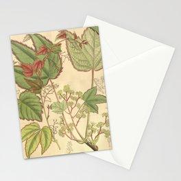 Flower 8287 parthenocissus tricuspidata Stationery Cards