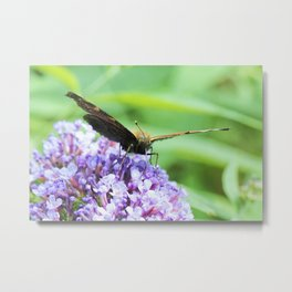 Butterfly X Metal Print