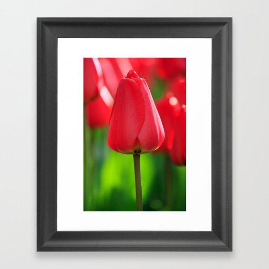 Red Tulip Framed Art Print