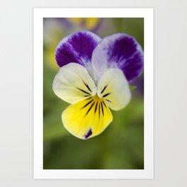 Macro flower 1 Art Print