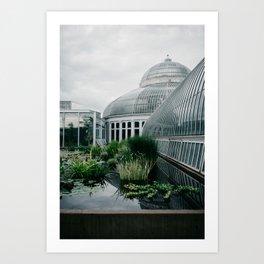 Como Park Conservatory - St. Paul, Minnesota Art Print