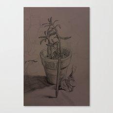Plant Still Life 1 Canvas Print