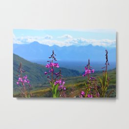 Fireweed Overlooking Mat-Su Valley, Alaska Metal Print