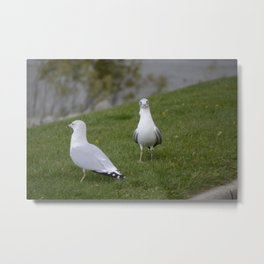 Pair of Seagulls Metal Print