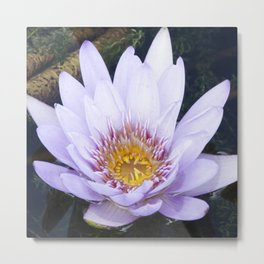 Blue Lotus Flower Metal Print