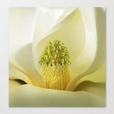 Magnolia Revealed Canvas Print