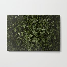 Clover with Rain Drops Metal Print