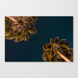 TROPICAL PALM Canvas Print