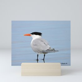 An Elegant Tern Mini Art Print