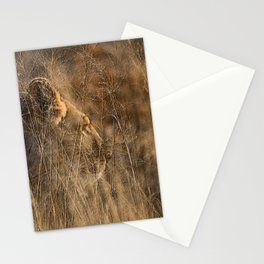 Lioness on Alert Stationery Cards