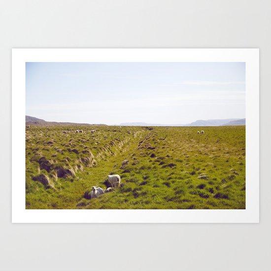 Sheeps in Iceland Art Print