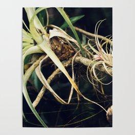Epiphyte Poster