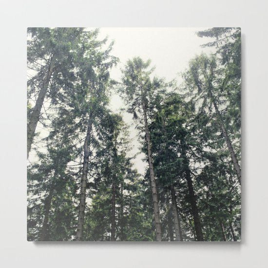 Up In The Woods Metal Print
