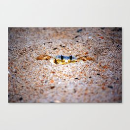 Ghost crab sighting Canvas Print