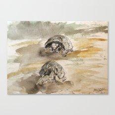 Tortoise Sketch #1 Canvas Print