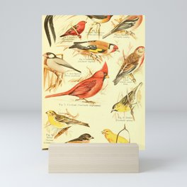William Playne Pycraft - A Book of Birds (1908) - Plate 28: Some Perching- or Song-birds Mini Art Print