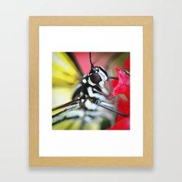 BFX | nourishing woodnymph SQUARE (butterfly) Framed Art Print