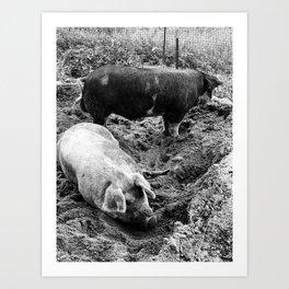 A Couple of Big Pigs Black & White Art Print