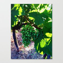 Grapes of Wrath Canvas Print