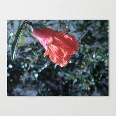 Flowers #15 Canvas Print