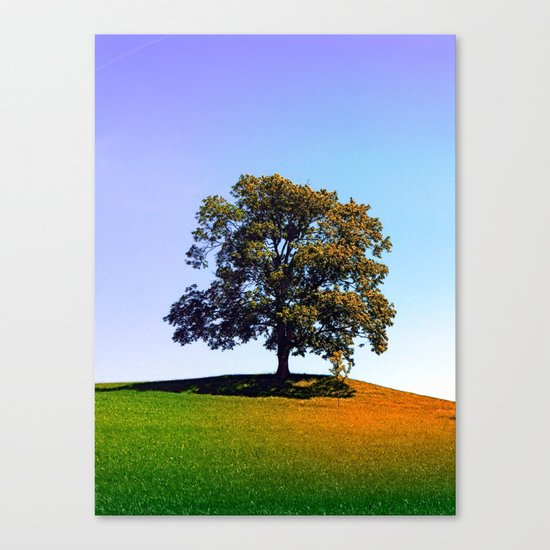 Posing tree on a hill in summertime Canvas Print