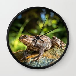 Amphibian, Common British Toad / Frog Wall Clock
