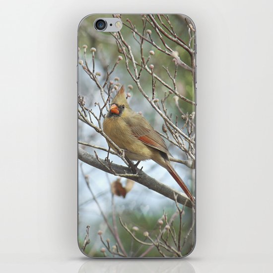 Lady Cardinal iPhone & iPod Skin