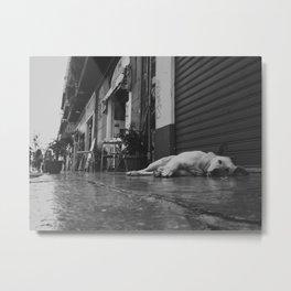 Palermo, Ballarò sleeping dog Metal Print