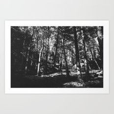 Up in the Woods / Boulder, CO Art Print