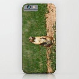 Black-Tailed Prairie Dog iPhone Case