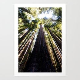 The Great Altar of the Church of the Redwood Forest Art Print