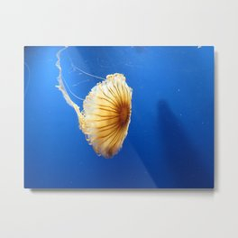 Jellyfish 2 Metal Print